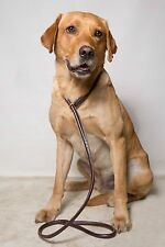 Dog & Field Genuine Rolled Leather Slip Lead - Working, Pet or Gundog Lead