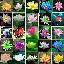 20 seeds of water lily mini small lotus Hydroponic flowers aquarium Waterlilies