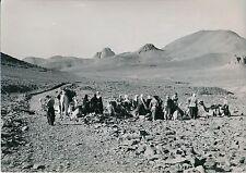 ALGÉRIE 1952 - Camp près de l'Oule Touaregs et leurs Chameaux Hoggar - Div 10597