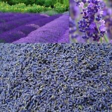 Dried French lavender strong fragrance highly aromatic.
