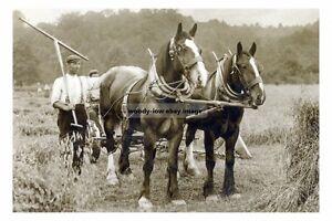 rp16992 - Farm Working Horses - print 6x4