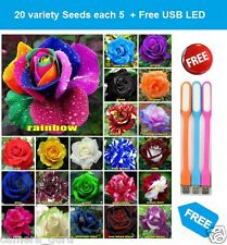 Rose Flower seeds 20 different colors 5 per pc