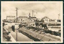 Oristano Arborea Mussolinia Mucche FG cartolina KF2118