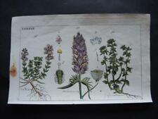 Orig. color. Kupferstich Botanik - BLUMEN ???   - um 1820  (#W1#)