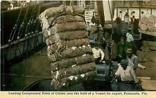 Florida, FL, Pensacola, Bales of Cotton for Export early Postcard
