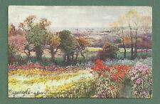 1908 PC A FIELD OF CHRYSANTHEMUMS GUERNSEY - HENRY B. WIMBUSH - RAPHAEL TUCK