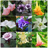 30pcs Flamenco Angel Trumpets Seed Garden Plant Bonsai Flower Seeds Home Decor