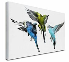 More details for budgerigars, budgies in flight x-large 30