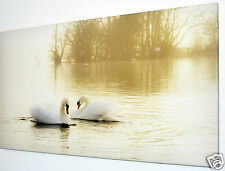 WHITE SWANS ON LAKE CANVAS PRINT WALL ART PICTURE  18 X 32 INCH