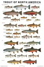 Trout of North America by Joseph R. Tormelleri Poster 24x36