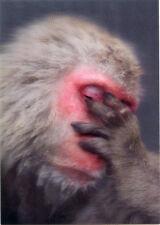Snow Monkey Lenticular 3D Postcard - Greeting Card