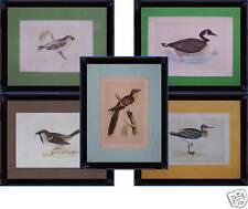 5 litografie color ucccelli Morris's British Birds 1891