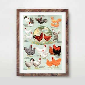 VINTAGE COUNTRYSIDE CHICKEN BREEDS CHART ART PRINT Agriculture Poster Wall
