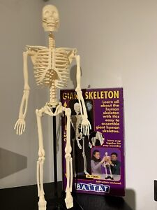 """Battat 25"""" (65 Cm) Giant Human Skeleton (1996) Pre Loved In Great Condition"""