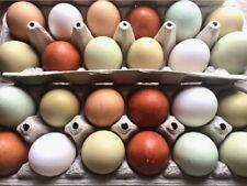 6 x Easter Egger Fertile Hatching Eggs