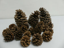 (ref288AW) Pine cones 3 Large 20 regular