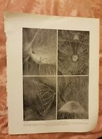Some Wonderful Spider Webs - Vintage Book Print