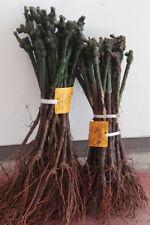 Altre piante ebay for Piante da frutto a radice scossa