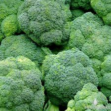 Broccoli Waltham 29 Vegetable Seeds 300+ NON-GMO USA SELLER FREE SHIPPING