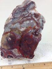 Mexican Crazy Lace Agate Slab Rough Natural Unpolished Multi-Color   #7A