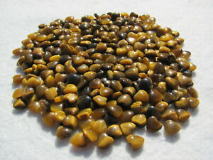 MASSIVE Lot Tiger eye heart Beads  54.9 grams / 274.5 cts