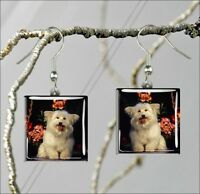 DOG BREAD COTON DE TULEAR BREED SQUARE GLASS CABOCHON EARRINGS -drf9Z