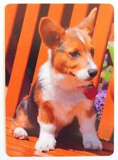 SWAP CARD. CORGI PUPPY / DOG ON PARK BENCH. PEMBROKE WELSH. ORANGE. WIDE. MINT