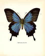 "1963 Vintage PROCHAZKA BUTTERFLY ""BLUE MOUNTAIN BUTTERFLY"" WOW! COLOR Lithograph"