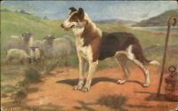 Csmooth Haired Collie Dog TUCK Oilette A/S c1910 Postcard