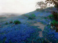Texas Bluebonnets Field in Early Morning Oil painting HD Printed on canvas L1723
