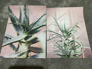 2 Brand New Desenio Prints Pink Green Succulents