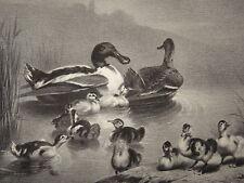 Léger CHERELLE (Versailles 1816-?) Litho ORIGINALE CANARDS OISEAUX BARBIZON 1850