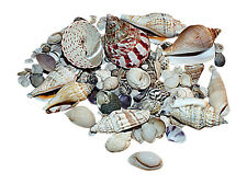 Hermit Crab,Shells, Marine Aquarium Shell Decoration 300 Gram Bags