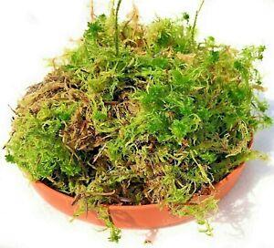Fresh Sphagnum Moss - Live Basket, Orchid, Reptile & Planting UK Peat Moss 1-12L
