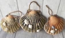 Dorset Scallop Shells X 3 Hanging Decoration Beach/Coastal/Nautical Christmas
