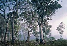 Mural Para Pared FANTASY Bosque Foto decorativo Enorme Árboles Decoración Hogar