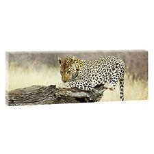 Top Bilder Kunstdruck auf Leinwand Wandbild Poster XXL Leopard 120 cm*40 cm 303