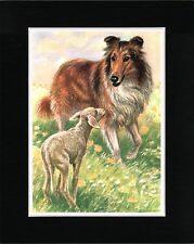 ROUGH COLLIE AND LAMB LOVELY OLD STYLE DOG ART PRINT READY MATTED
