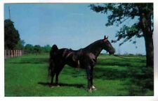 TENNESSEE WALKING HORSE, TANNER STOCK FARM,FRANKLIN TENN. POSTCARD, VTG. 1950'S