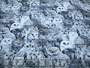 3 Yards Quilt Cotton Fabric - Timeless Treasures Wicked Owls Packed Bright Eyes