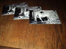 SHEILA LOT DE PHOTOS FORMAT 10*15 N&B - THEME 037 CANICHE - 3 PRISES