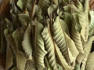 100+ Organic Garden Guava Leaves, Stop Hair Loss Treatment Fresh Green Dried