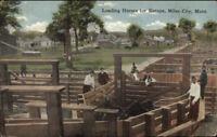 Miles City MT Loading Horses For Europe c1910 Postcard
