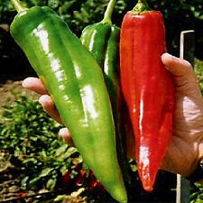 NuMex Big Jim Pepper Seeds (10 seeds)