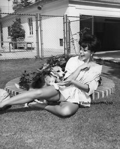 """JOAN COLLINS - 10"""" x 8"""" b/w Photograph Relaxing At Home In Hollywood 1958"""