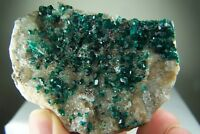 Beautiful DIOPTASE CRYSTALS on matrix from KAZAKHSTAN, type locality! - 2.25""