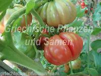 🔥 🍅 Tomate Costoluto Fiorentino Fleischtomate Tomaten 10 frische Samen Balkon