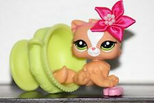 Littlest Pet Shop PERSIAN CAT KITTEN LOT 2444 blind bag ORANGE PEACH  ACCESSORY
