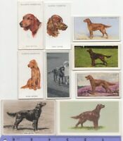 Irish Setter Dog Pet Canine 9 Different Vintage Ad Trade Cards #4