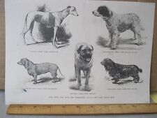 Vintage Print,PRIZE DOGS,13th Annual New York Dog Show,Harpers,1889